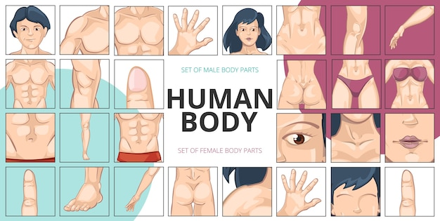 Human body parts composition