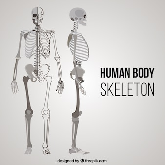 Human body skeleton in different positions