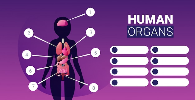 Human body structure infographic poster with female internal organs icons anatomy system board portrait horizontal
