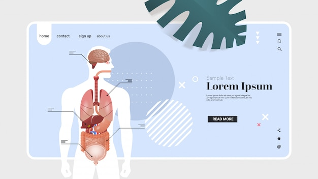 Human body structure infographic poster with internal organs anatomy system portrait horizontal copy space