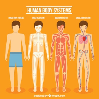 Human body system collection