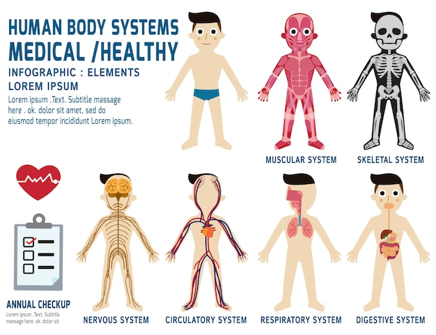 Human body systems annual checkup anatomy body organ chart