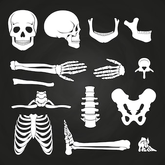 Human bones collection on chalkboard