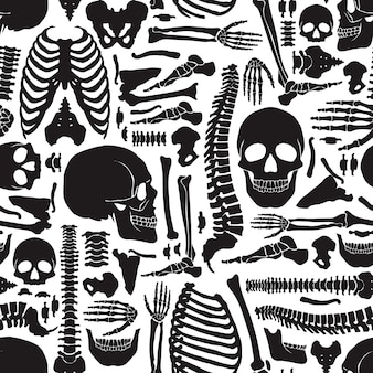 Human bones skeleton pattern
