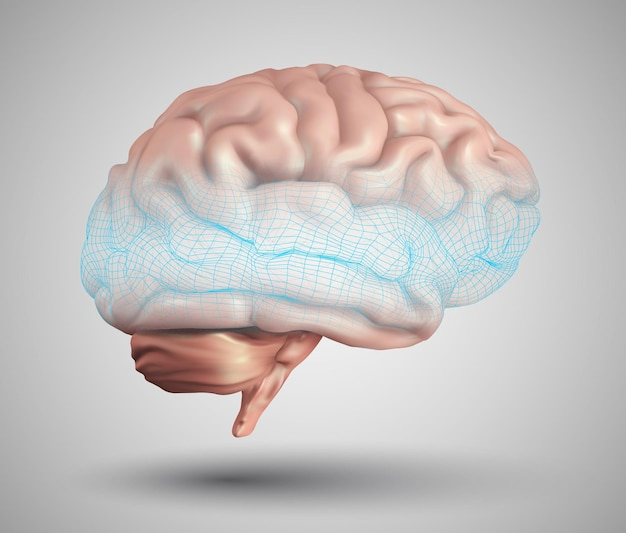 人間の脳と抽象的なデザイン要素。メッシュ