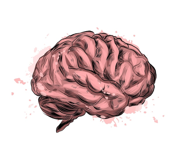 Human brain from a splash of watercolor, colored drawing, realistic.