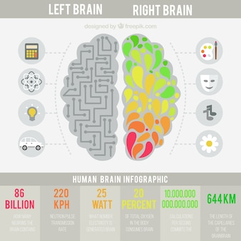 Human brain infographic in flat design