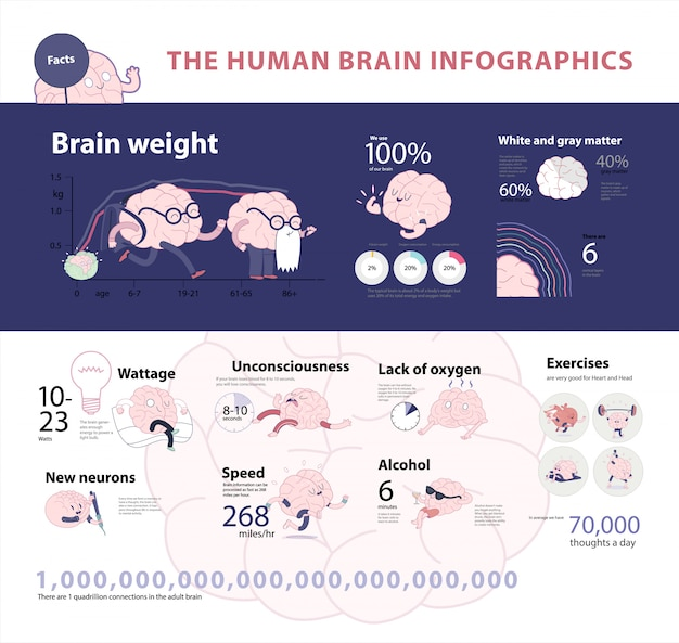 Human brain infographic set 2, cartoon vector isolated images accompanied with statistic facts and graphs