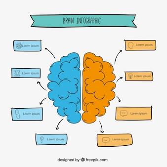 손으로 그린 스타일에서 인간의 두뇌 infographic 템플릿