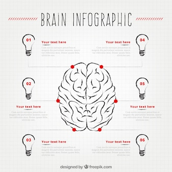 Human brain infographic with six light bulbs