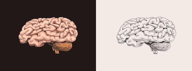 Human brain nervous system retro vector illustration for woodcut or print hand drawn sketch