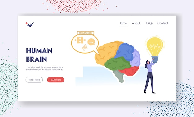 Human brain parts anatomy landing page template. tiny female character with bulb at huge human brain separated on parts and working frontal lobe, intellect, creativity. cartoon vector illustration