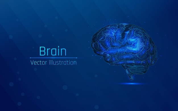Human brain in wireframe style