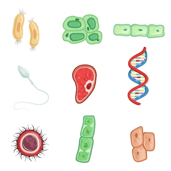 Human cells set, cells involved in the process of human life detailed  illustrations on a white background