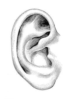 人間の耳の手が白い背景で隔離ヴィンテージを描く