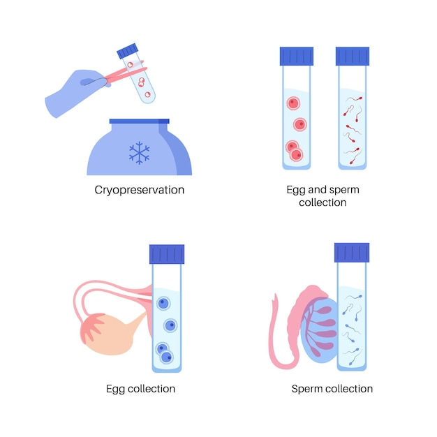 Human egg cell anatomy. fertilisation, gynecology and ivf research.