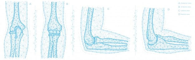 人間の肘関節の多角形の図。腕の骨の解剖学の概念。医療の抽象的な低ポリゴンデザイン