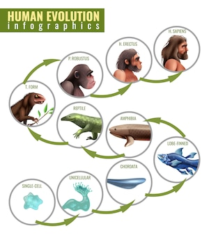 Human evolution infographics