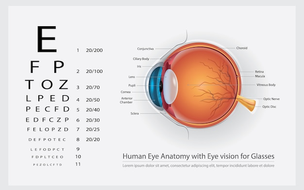 Human eye anatomy with eye vision for glasses illustration