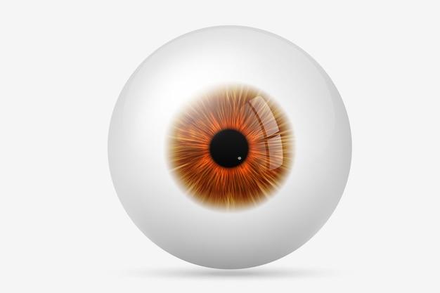 Человеческий глаз