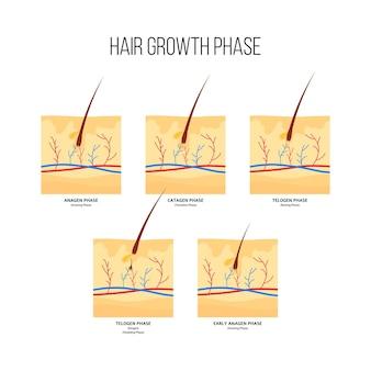 人間の髪の成長段階スキームフラットスタイル