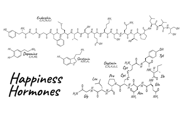 人間の幸福ホルモンの概念化学骨格式アイコンラベル、テキストフォントベクトルイラスト、白で隔離。周期表。健康的なライフスタイルの内分泌系。