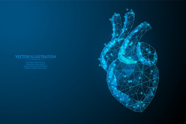 Human heart close up. organ anatomy. blood supply system. hypertension, heart attack, stroke, arrhythmia. innovative medicine and technology. 3d low poly wireframe illustration.