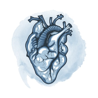 Human heart drawn in detail on a watercolor loop background.