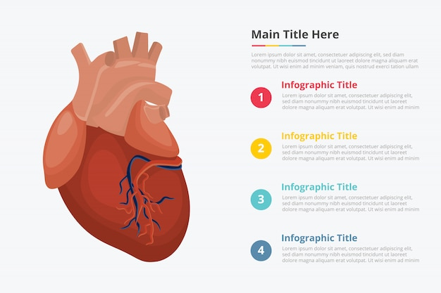 Human heart infographic template