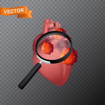 Человеческое сердце под увеличительным стеклом с вирусными клетками. медицинская иллюстрация поиска вируса или поиска во внутреннем органе с лупой, изолированной на прозрачном фоне