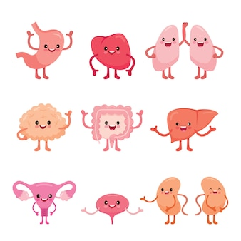 Human internal organs, cartoon characters set