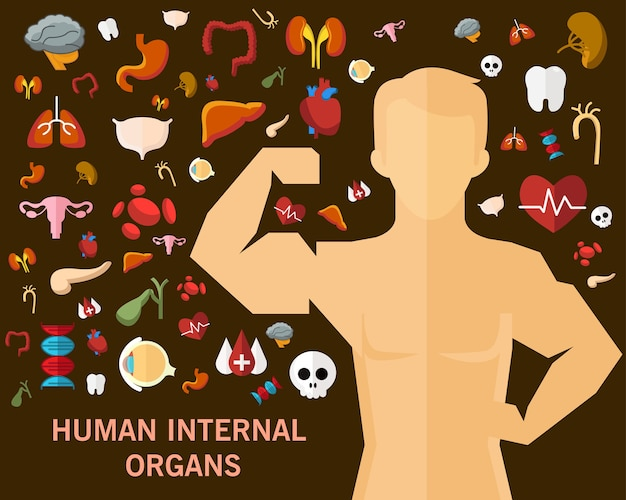 Human internal organs consept background. flat icons.
