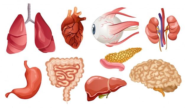 인간의 내부 장기 평면 아이콘. 만화 스타일의 큰 컬렉션. 생명 기관 뇌, 심장, 간, 비장, 신장, 눈, 췌장 세트