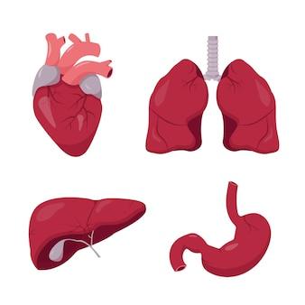 인간의 내부 장기를 설정합니다. 심장 폐 간 및 위장 해부학 아이콘 모음