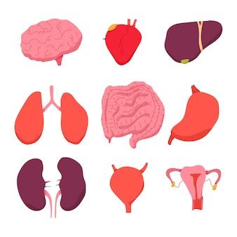 인간의 내부 장기 벡터 만화 세트 흰색 배경에 고립.