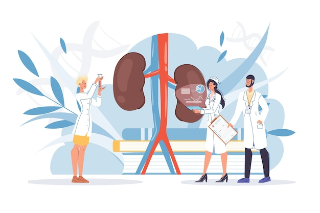 Human kidneys inspection inner organ disease treatment