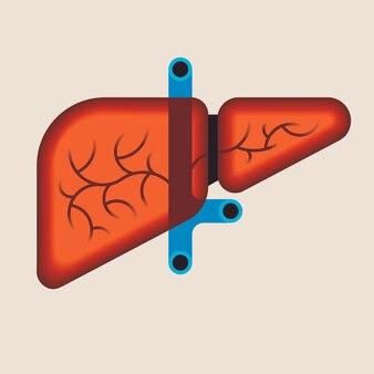 Анатомия печени человека. медицинская наука иллюстрация. внутренний орган: желчный пузырь, воротная вена, печеночный проток. плоский значок