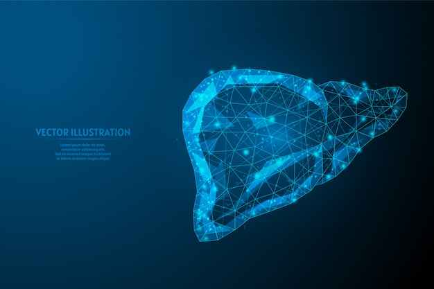 Human liver close-up. organ anatomy. diagnosis of the disease cirrhosis, cancer, intoxication, hepatitis. innovative medicine and technology. 3d low poly wireframe illustration.