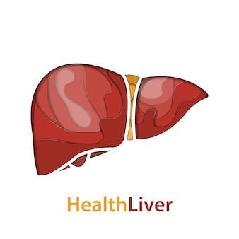Human liver paper cut concept
