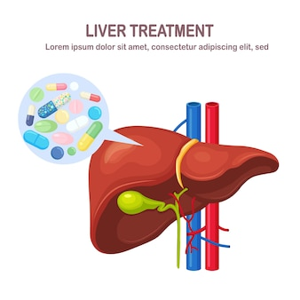 Human liver with pills, drugs, medicine isolated on white background. internal organ. gallbladder, aorta, portal vein, hepatic duct. medical science anatomy. treatment. vector flat design