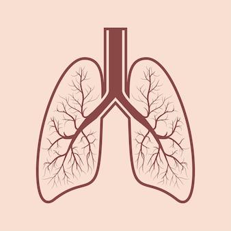 Human lung anatomy. respiratory system graphics. vector illustration.