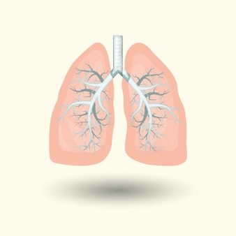 Human lungs, cartoon style illustration  isolated on white background