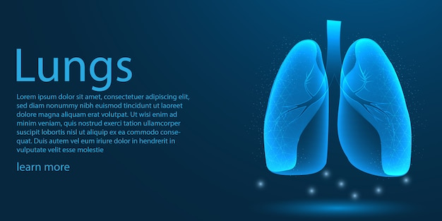 Human lungs medical, low poly concept.