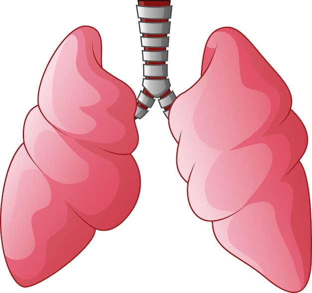 Human lungs respiratory cartoon