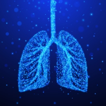 Human lungs. respiratory system.  illustration
