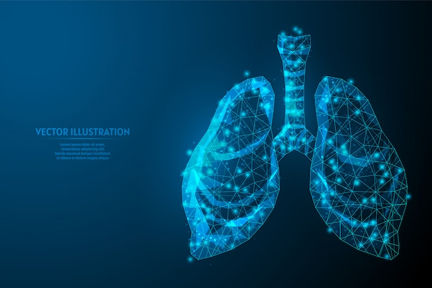 Human lungs and trachea. organ anatomy. coronavirus pneumonia, cancer, organ transplant, tuberculosis, asthma. innovative medical technology. 3d low poly wireframe illustration.
