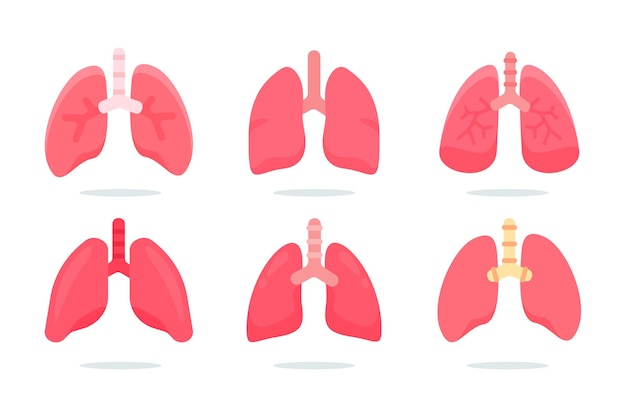 Human lungs vector. the lungs are the internal organs of the body that aid in breathing.