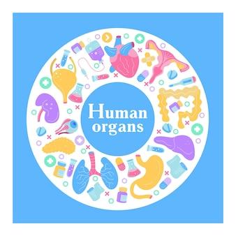 人間の臓器。ベクトル要素のセット。