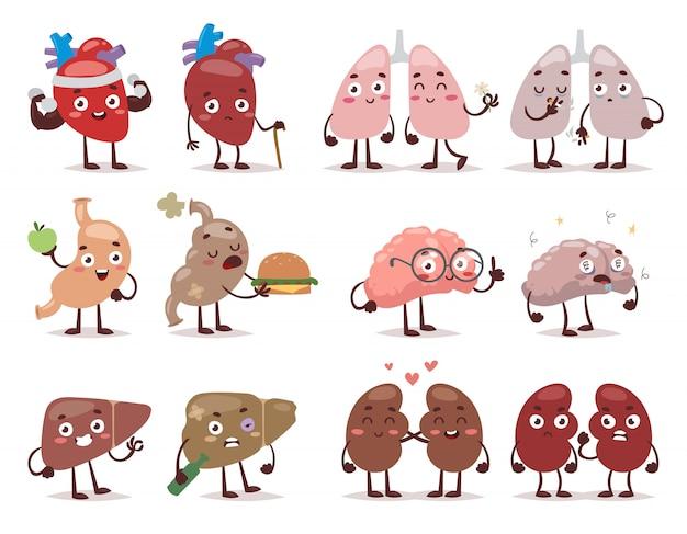 Human organs characters
