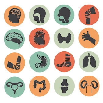 Human organs  flat color icons